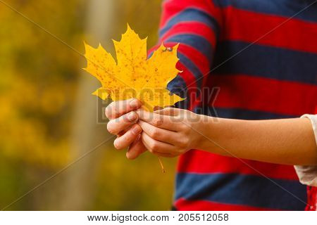 Nature outdoor scenery autumnal fall concept. Young person holding leaf. Human showing yellow maple foliage.