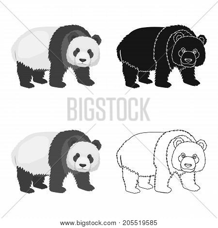 Panda, a bamboo bear. Panda, a rare species of animal single icon in cartoon style vector symbol stock illustration .
