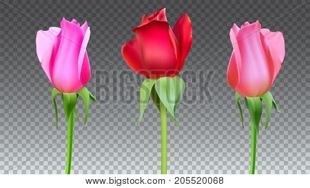 Realistic roses Buds with stem and leaves. Closeup, isolated on transparent background the flower Bud of the rose. The symbol of romance and love, a template for a greeting card, 3D illustration.