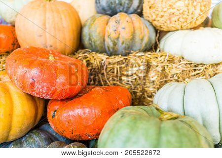 Macro Closeup Of Small Yellow Decorative Carving Pumpkin Squash On Dry Dried Hay Stack Display By St