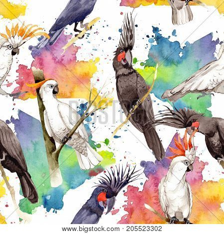 Sky bird white macaw parrot pattern  in a wildlife by watercolor style. Wild freedom, bird with a flying wings. Aquarelle bird for background, texture, pattern, frame, border or tattoo.