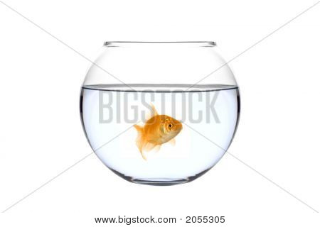 Golden Fish In A Bowl