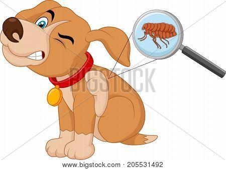 Vector illustration of flea Infested Dog on white bakground