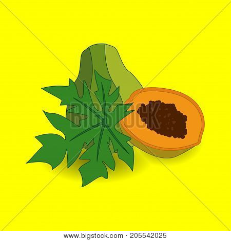 Whole unpeeled, uncut papaya tropical fruit in horizontal position, sketch style vector illustration with place for text. Realistic hand drawing of whole papaya fruit