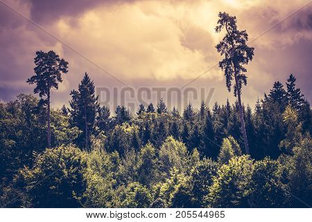 Photo of a moody sky over a thick forest in the early evening.