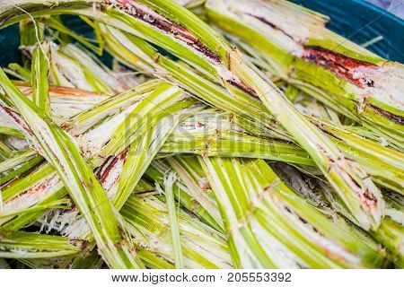 Sugar Cane For Recycling Energy Sugarcane Bagasse Reuse For Nature Fiber Paper And Biofuel Recycle F