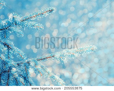 Fairy-like blue twigs of a pine tree covered with ice (as a Christmas or New Year background) with copy space on the right