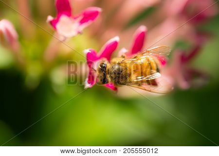 macro bee top view catch on nature flower shallow depth of field