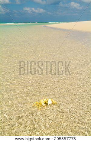 The Beach Of Qalansiya On The Island Of Socotra