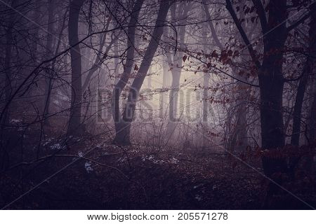 Misty Morning In A Dark Autumn Forest