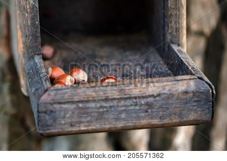 Close up wooden feeder table for birds and squirrels with several nuts in it