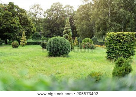 Park with shrubs and green lawns, landscape design. Topiary, green decor in the park