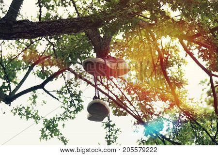 old pair of canvas shoes hanging or dangling from tree branch. with sun flare.