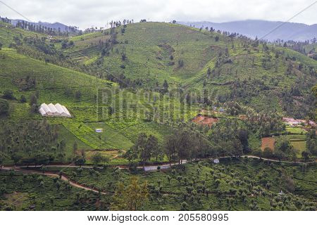 Indian tea plantation in the Darjiling at cloudy weather