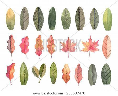 Hand drawn watercolor illustrations. Autumn Botanical clipart. Set of fall leaves. Floral Design elements. Perfect for invitations greeting cards blogs posters prints
