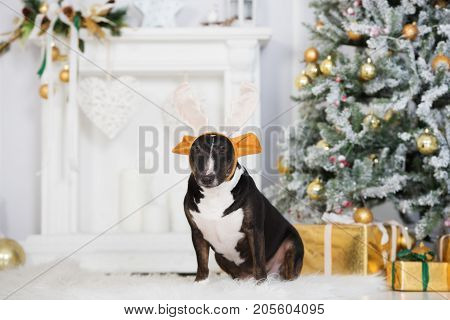 funny dog wearing antlers posing for Christmas