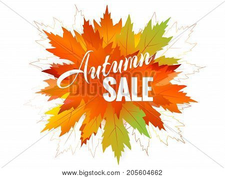 Autumn sale background layout decorate with leaves for shopping sale or promo poster Bright fall leaves Bright fall leaves Poster, card, label, banner design Vector illustration