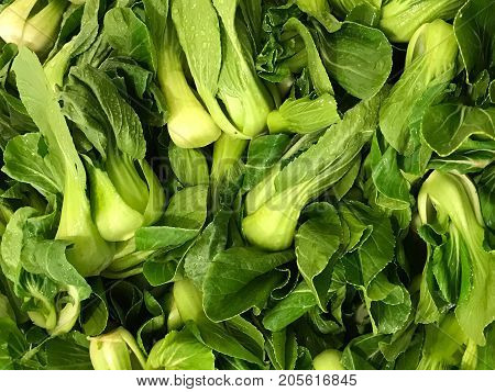 Group of fresh organic Pak Choy (Chinese cabbage) food and healthy concept