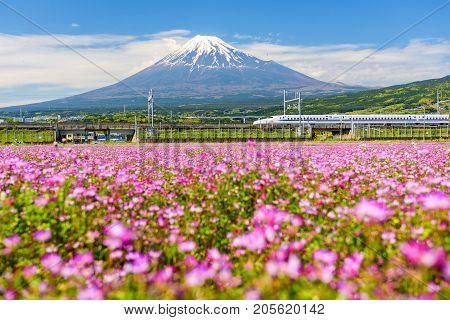 Shinkansen At Mount Fuji And Shibazakura, Shizuoka