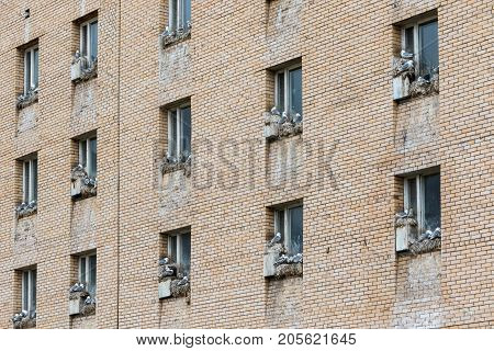 Sea gulls nesting on window sills in the abandoned Russian settlement Pyramiden in Svalbard