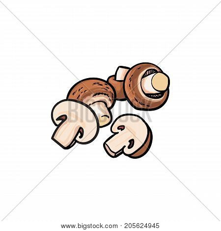 Group of whole and halves of champignons, button mushrooms, sketch style vector illustration isolated on white background. Hand drawn champignons, button mushrooms, whole and cut in half