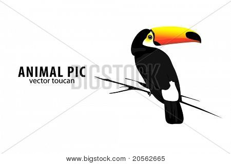 illustration of a toucan on white background