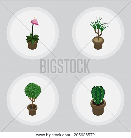 Isometric Plant Set Of Grower, Peyote, Houseplant And Other Vector Objects