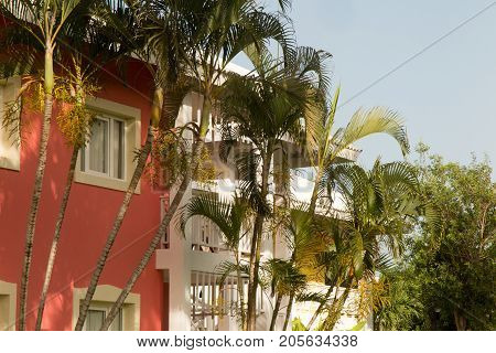Queen Palm Trees Growing Among Modern House In The Garden