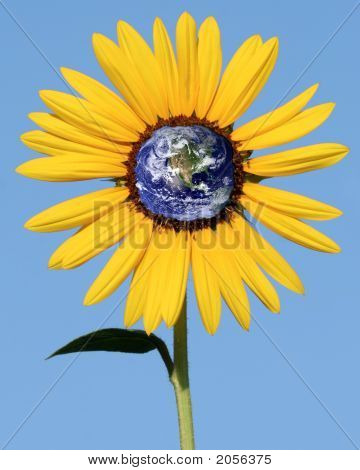 Sunflower With Earth Center