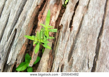 Young Plant Growing On The Old Wooden Tree New Life Idea Concept With Seedling Growing (Tree) Growing Concept.