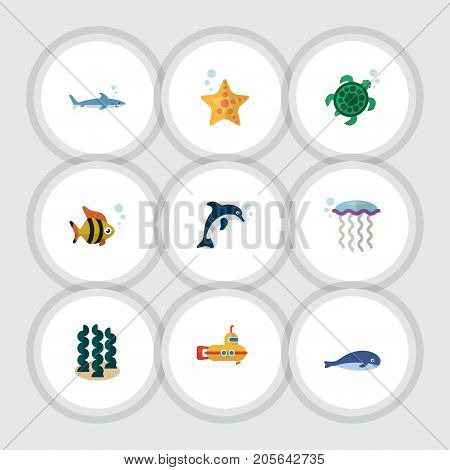Flat Icon Marine Set Of Alga, Medusa, Sea Star And Other Vector Objects