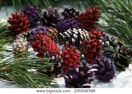 Close up of nature winter decoration. Colorful strobilas with pine on white background. Christmas and New Year holidays, celebration and decor concept