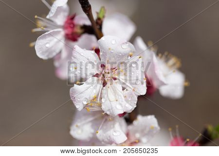 beautiful flowers on a tree. macro . In the park in nature