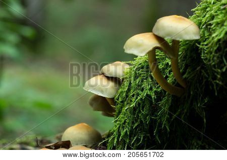 Mushrooms on tree, forest mushrooms, mushrooms on trunk, wild fungus.
