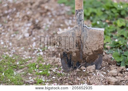 spade in the garden . In the park in nature
