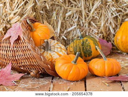 Colorful pumpkins and gourds in a basket with a strw bale background