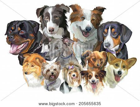 Set of colorful vector portraits of dog breeds (Rottweiler border collie; toy Terrier papillon Pembroke Welsh Corgi SheltieYorkshire Terrier Italian Greyhound Biewer terrierEntlebucher Mountain Dog) isolated on white background