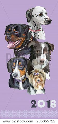 Vertical postcard with dogs of different breeds (Rottweiler; border collie; Dalmatian; Biewer terrier Entlebucher Mountain Dog) on purple background. 2018 year of dog.