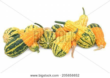 Assortment Of Orange, Green And Yellow Ornamental Gourds