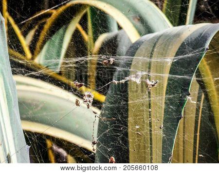 Telaraña entre varias hojas de una planta