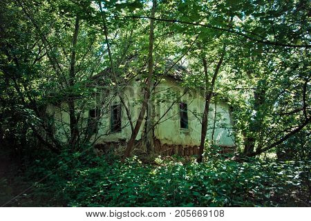 Abandoned village. Overgrown ruined rural house in Averino village, Voronezh Region