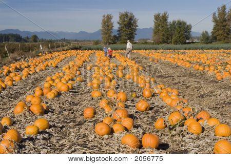 Pumpkin Farm In Cloverdale, British Columbia #2