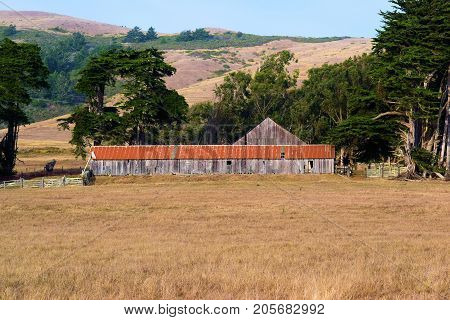 Forgotten landscape including the haunting image of a collapsing wooden barn taken at the Northern California Coast in Sonoma County, CA