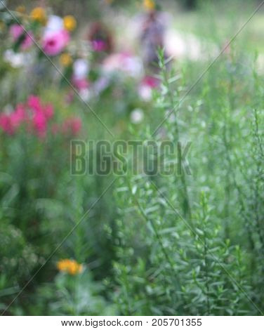 An abstract floral and green background representing spring intentionally out-of-focus.