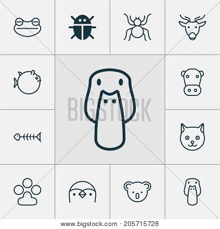 Nature Icons Set. Collection Of Spider, Seafood Skeleton, Marsupial And Other Elements