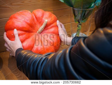 A woman chooses a pumpkin in the market. Orange pumpkin in the hands. Big pumpkin in woman hands. Yellow pumpkin holding hands. Beautiful big pumpkin