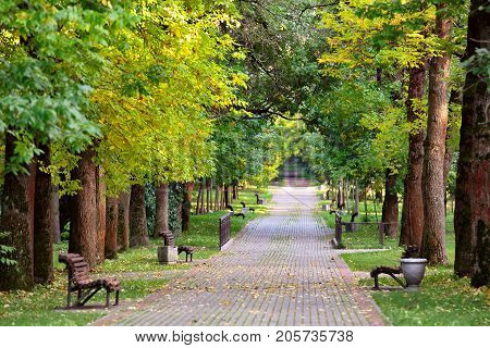Autumn Landscape – Benches On A Beautiful Autumn Walkway In Park. Maple Alley.