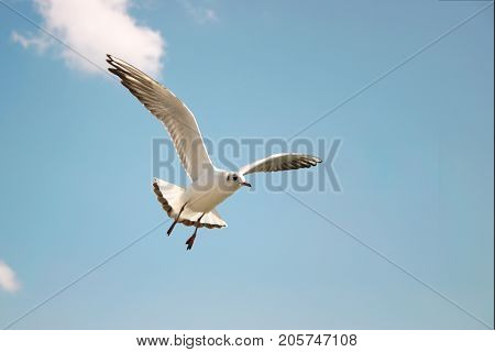 Seagulls soar in the clear blue sky on a sunny day.