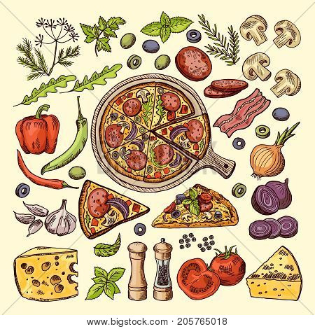 Slices of pizza with cheeses, olives and other ingredients. Vector hand drawn illustrations italian pizza ingredient, vegetable mushroom and garlic