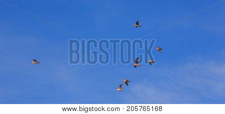 Group of seagulls against blue sky in sunset light, Palanga, Lithuania, Europe